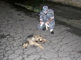 cão atropelado
