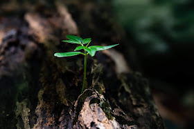 Close up of green flora plant growing out of a tree trunk