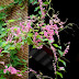 Hai sắc hoa ty-gôn- TTKH (diễn ngâm: NS Lan Hương)