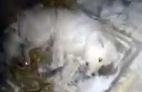 Chú chó bị chủ bỏ rơi giữa thời tiết -32 độ C