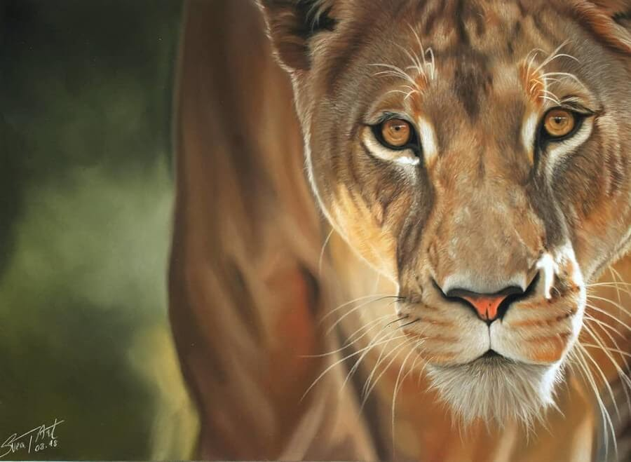07-Lioness-10-Svea-T-Animal-Portrait-Drawings-and-an-Eye-www-designstack-co