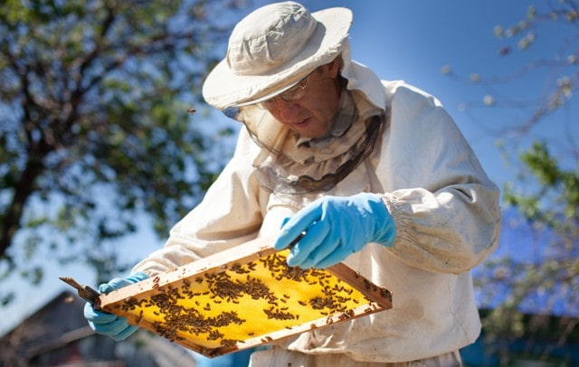 how to start beekeeping business honey bee startup selling bees hive sales
