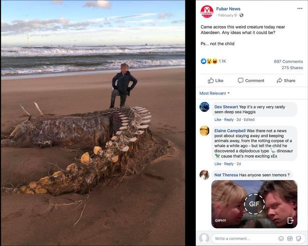 Huge Mysterious Skeleton Washed Up On Scots Beach