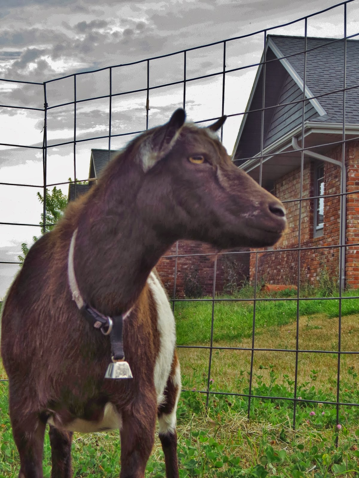 A Goat S Journey Over Life S: Life On A Small Acreage Goat Farm