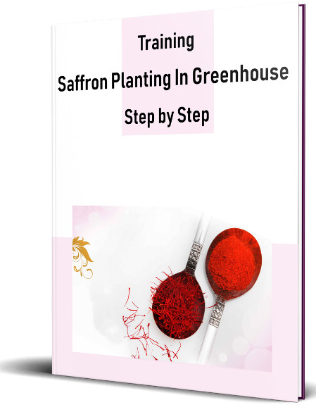 Training Saffron Planting In Greenhouse STEP BY STEP PDF BOOK. With this book, you can easily create your greenhouse of saffron anywhere in the world.