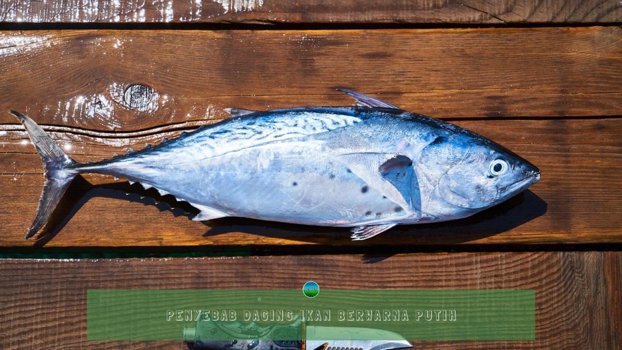 Penyebab Daging Ikan Berwarna Putih