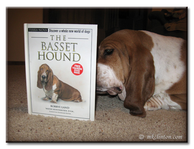 Basset Hound reading The Basset Hound Book