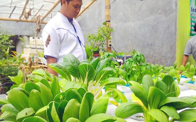 Pertanian Hidroponik, mengandalkan aliran air, nutrisi dan oksisgen