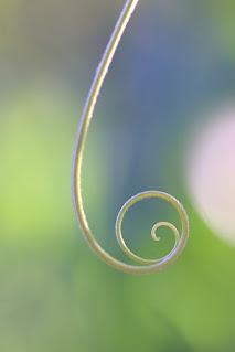 tendril swirl and bokeh