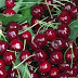 Albanian Farmers complain in Lushnje about cherries price abuse when going to consumer