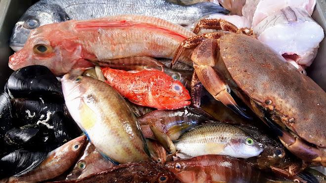 Les poissons des rivages de Provence et de Méditerranée