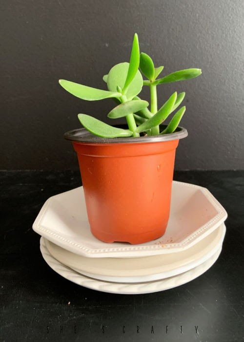 Ceramic dishes used as saucers for plants.
