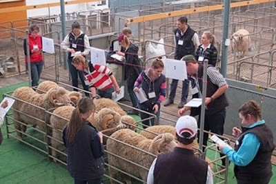 A group investigating Biotinylated dextran amine (BDA) genetic modification of sheep