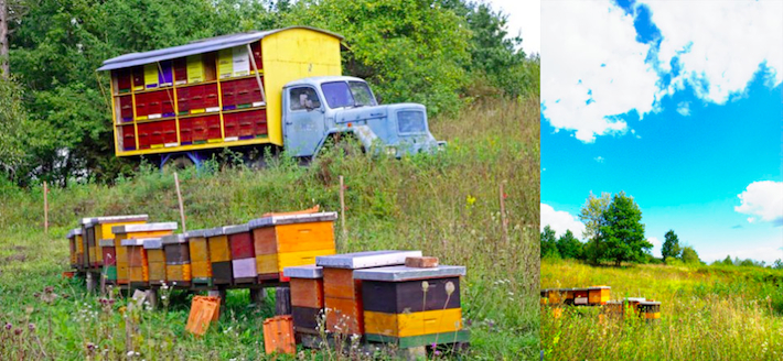 one hundred bee hives in truck and in boxes