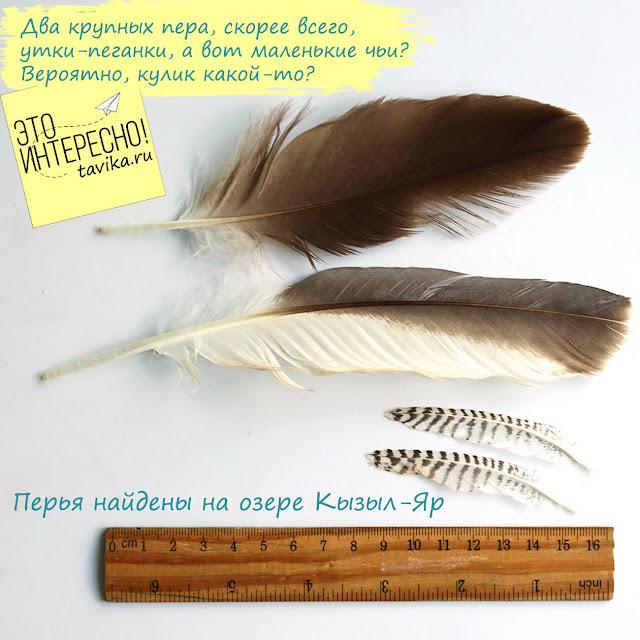 коллекция птичьих перьев
