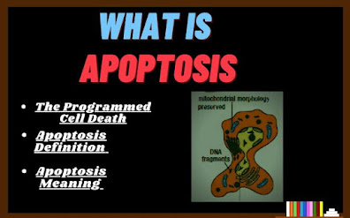 apoptosis meaning, Apoptosis Definition, What is apoptosis, programmed cell death, what is meant by programmed cell death, apoptosis meaning in biology, mechanism of apoptosis, The Science Info