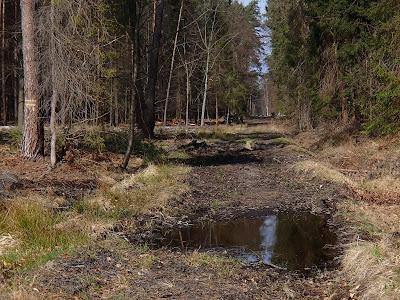 Puszcza Dulowska, wiosna w Puszczy Dulowskiej