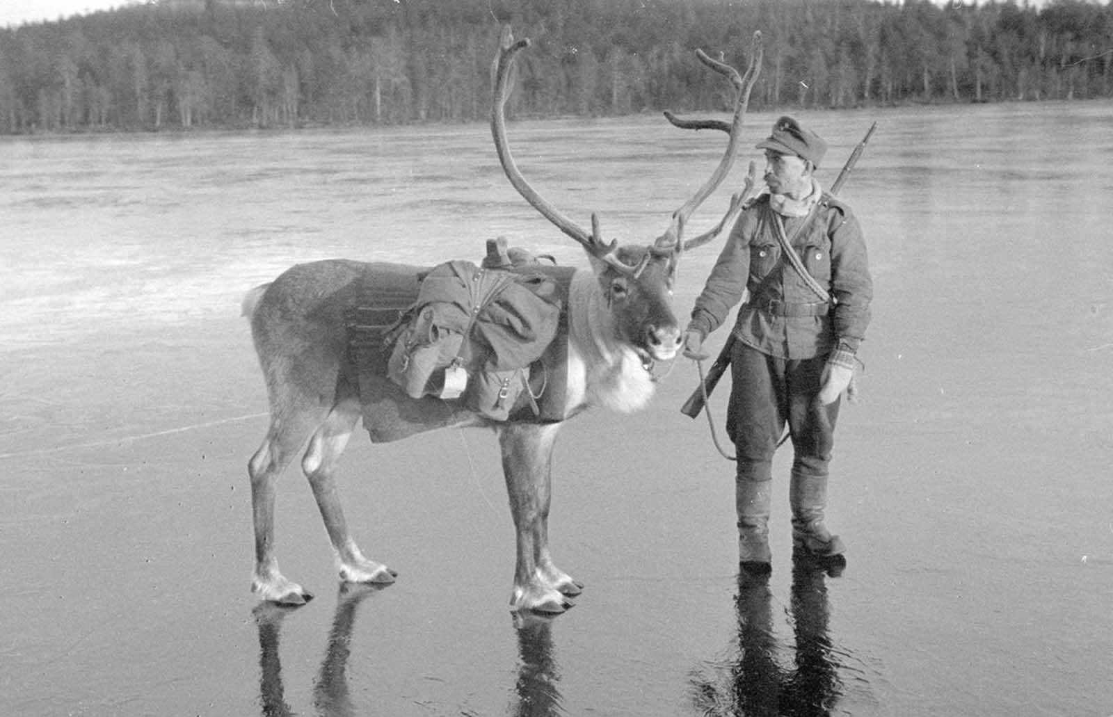 A soldier with a pack Reindeer, on slippery ice, near the tiny village of Nautsi, in northern Lapland, Finland, on October 26, 1941.