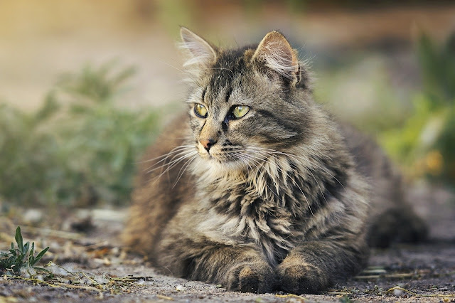 gambar kucing lucu hd