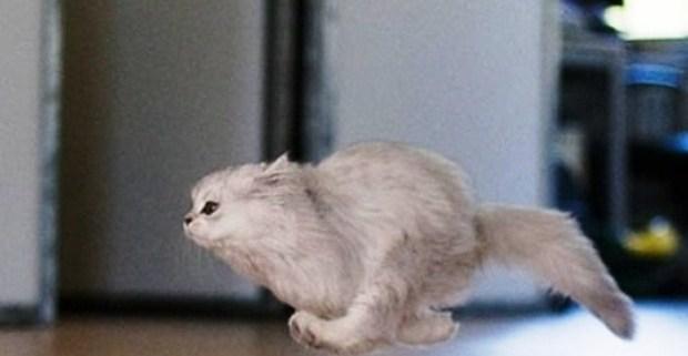 Cuidados de una mascota en un conjunto residencial