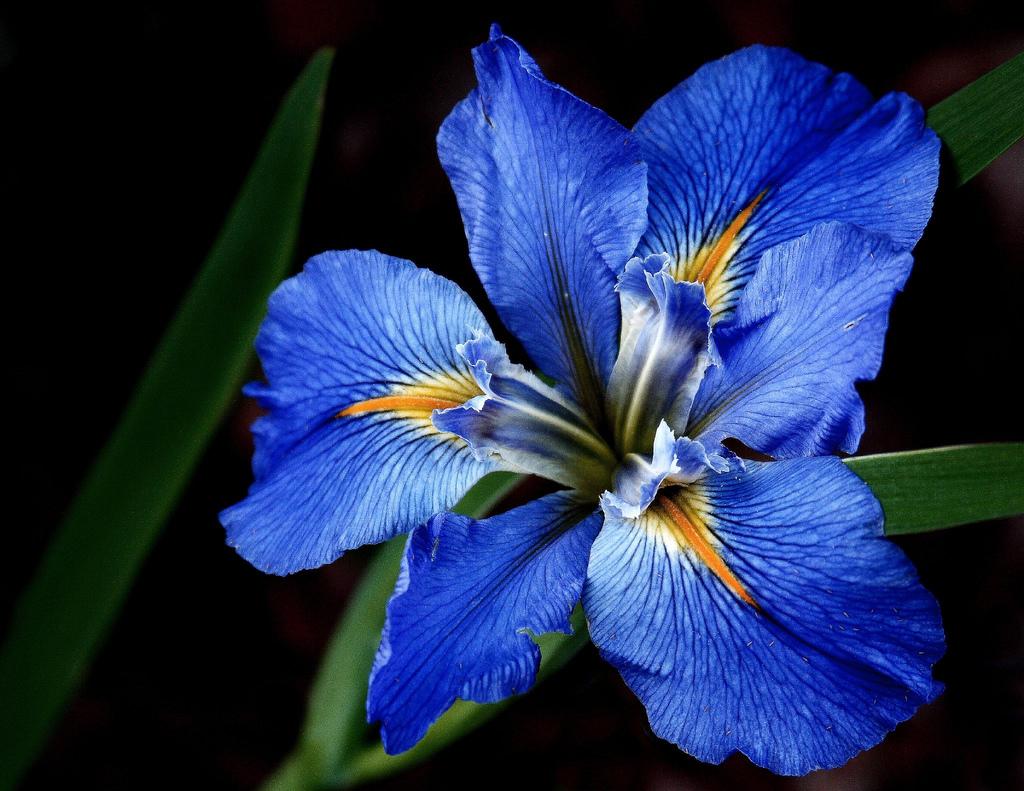 Sevdiğiniz Çiçeklerin Altında Yatan Şaşırtıcı Anlamlar ~ Yeşil Parmak