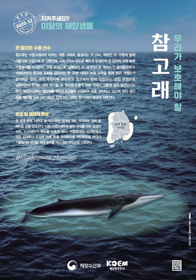 해수부, 2020년 12월 이달의 해양생물 '참고래' 선정
