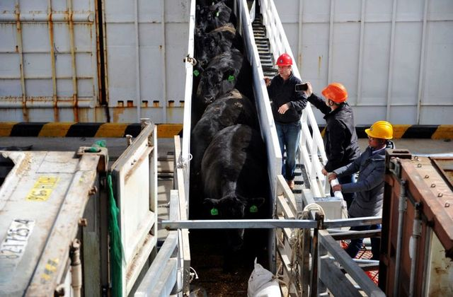 China Setop Impor Daging Sapi Australia Gegara Desakan Penyelidikan Corona