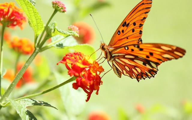Bộ ảnh thiên nhiên, phong cảnh đẹp nhất FULL HD 4
