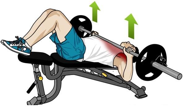 Workoutpedia: Chest  Workoutpedia: C...