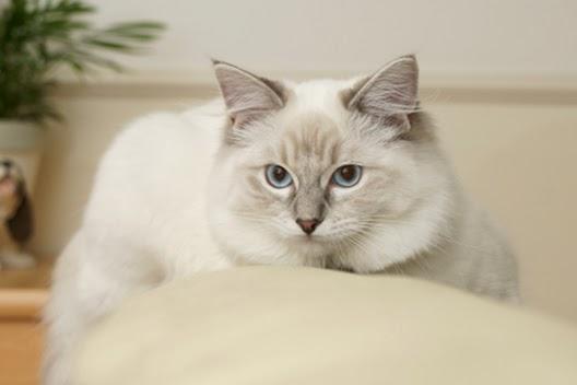 Jak pozbyć się zapachu moczu kota?