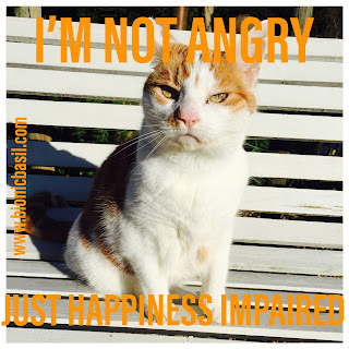 Angry Amber @BionicBasil® Bad Tempered Kitty - I'm Not Angry Just Happiness Impaired