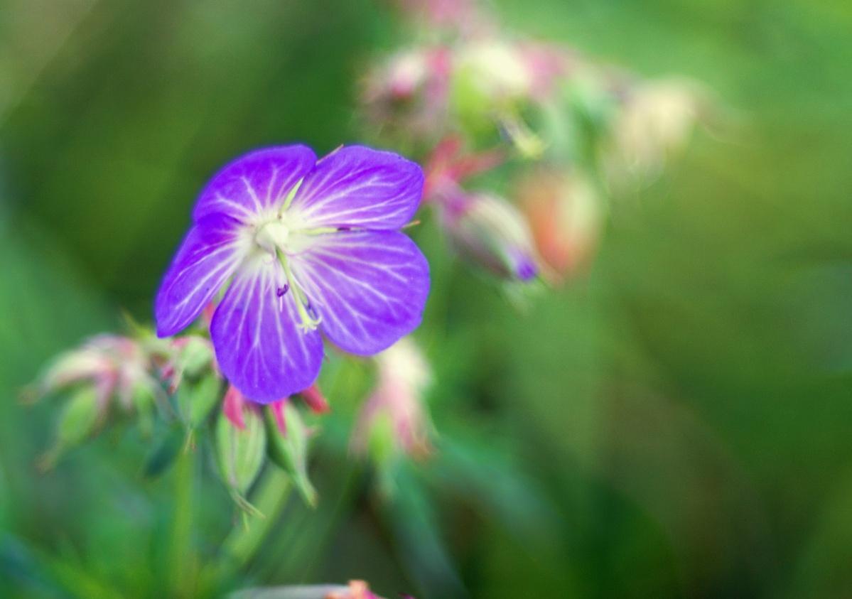 Die Natur hat die schönsten Farbkombinationen