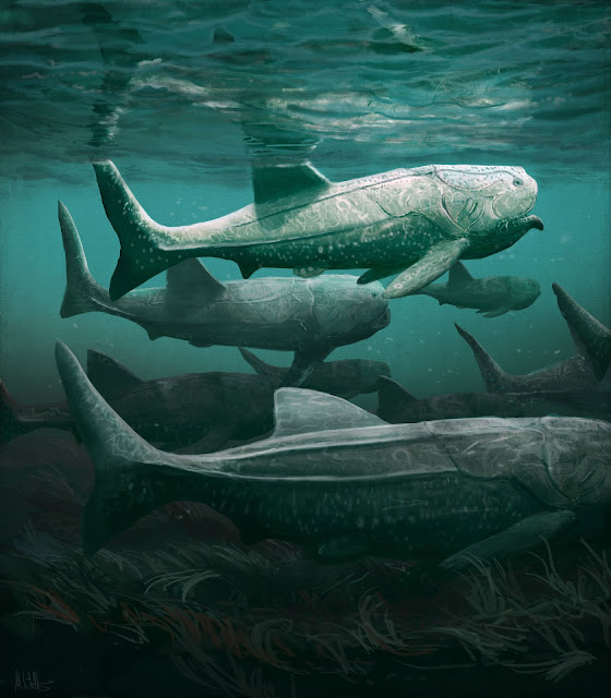 Ancient giant armoured fish fed in a similar way to basking sharks