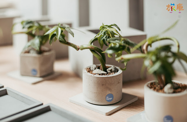 療癒的水泥植物盆栽