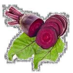 beet in spanish