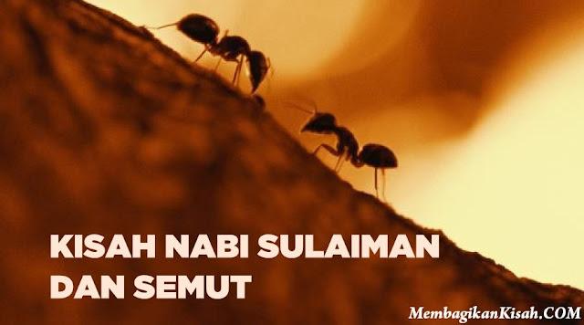 Kisah Nabi Sulaiman as. dan Semut