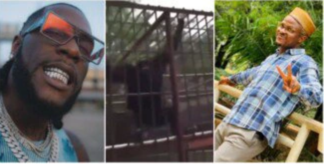 Burna Boy speaks on video of man shouting his name on sighting gorilla at a zoo
