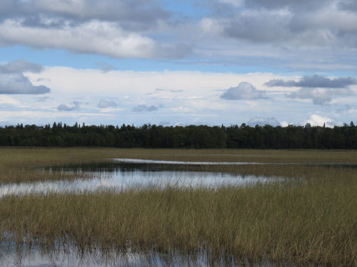 Tamarack Wildlife refuge