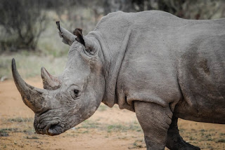 Information About Rhinoceros in Hindi