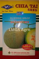 jual benih melon action 434,benih melon action 434,melon action 434,budidaya melon,benih melon,tanaman melon,lmga agro
