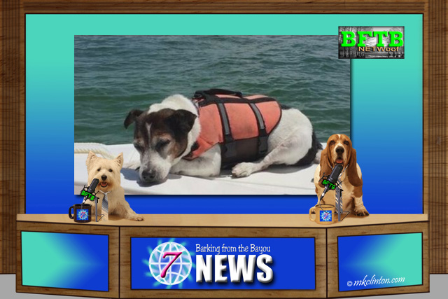 BFTB NETWoof News with dog water rescue
