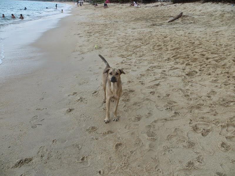 Собака на пляже Маенам