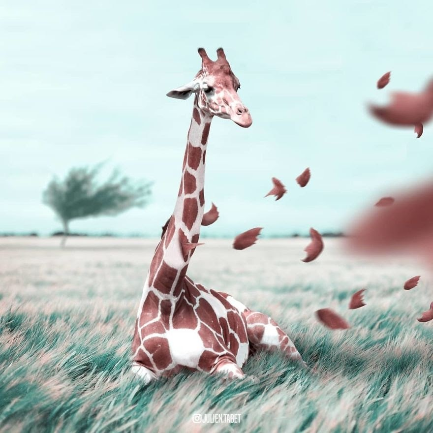 13-Autumn-and-Giraffes-Julien-Tabet-Animals-and-Architecture-Photoshopped-Surrealism-www-designstack-co