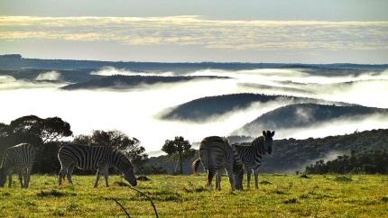 A dél-afrikai szavannán