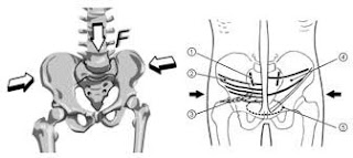 images of pelvis and sacroiliac joints