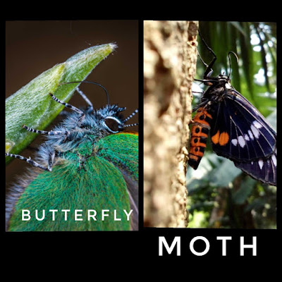 Forelegs-of-butterfly-and-moth