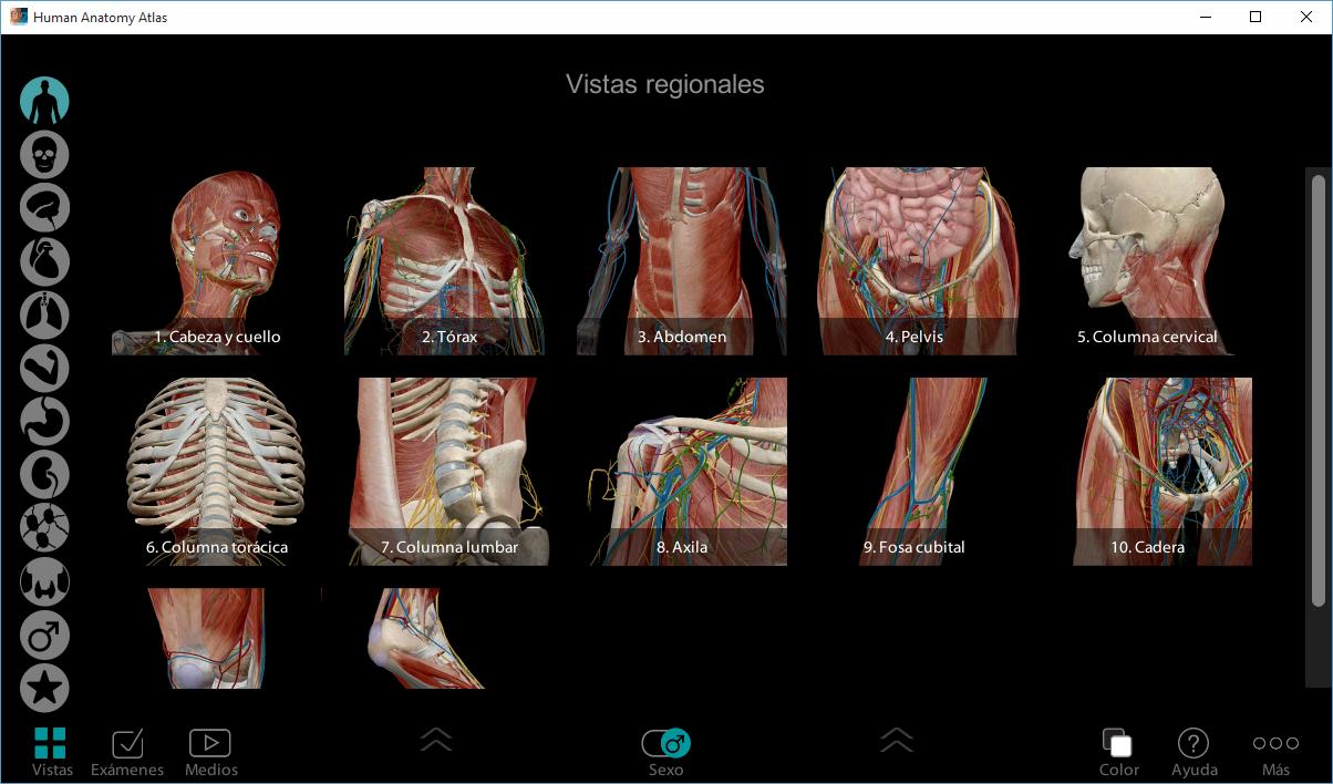 AIO Visible Body [Anatomía del cuerpo humano 3D]