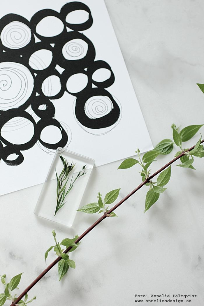 torkade växter, torkad växt i plastkub, kub, hårdplast, kuben, torkat, poster cirklar, grafiskt, grafiska, grafisk, annelies design, webbutik, webbutiker, webshop, inredning, inredningsdetaljer, svart och vitt svartvit, svartvita, vitt, vit, vita, svart, svarta, poster, posters, print, prints, konsttryck, tavla, tavlor,