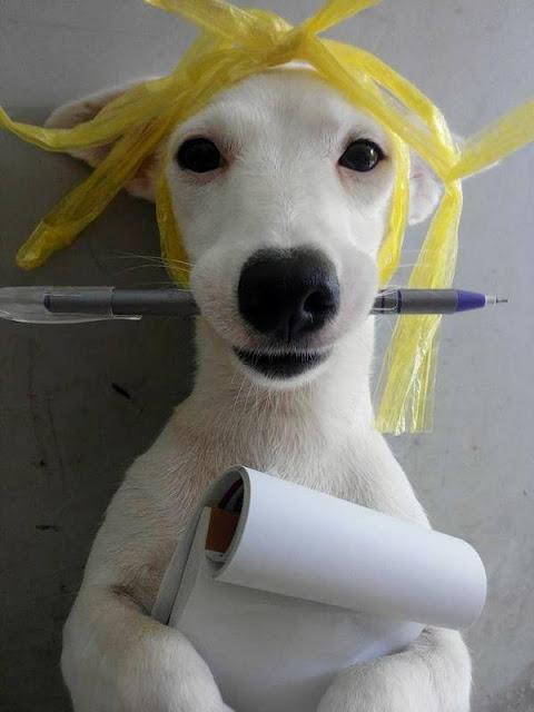 """""""50 sắc thái"""" tạo dáng của chú cún khiến cư dân mạng Việt Nam mê mệt"""