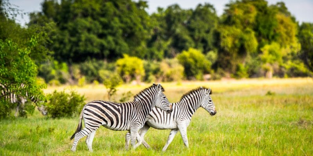 AFRICA: Rob and Melani Walton Foundation commits $100m to wildlife conservation